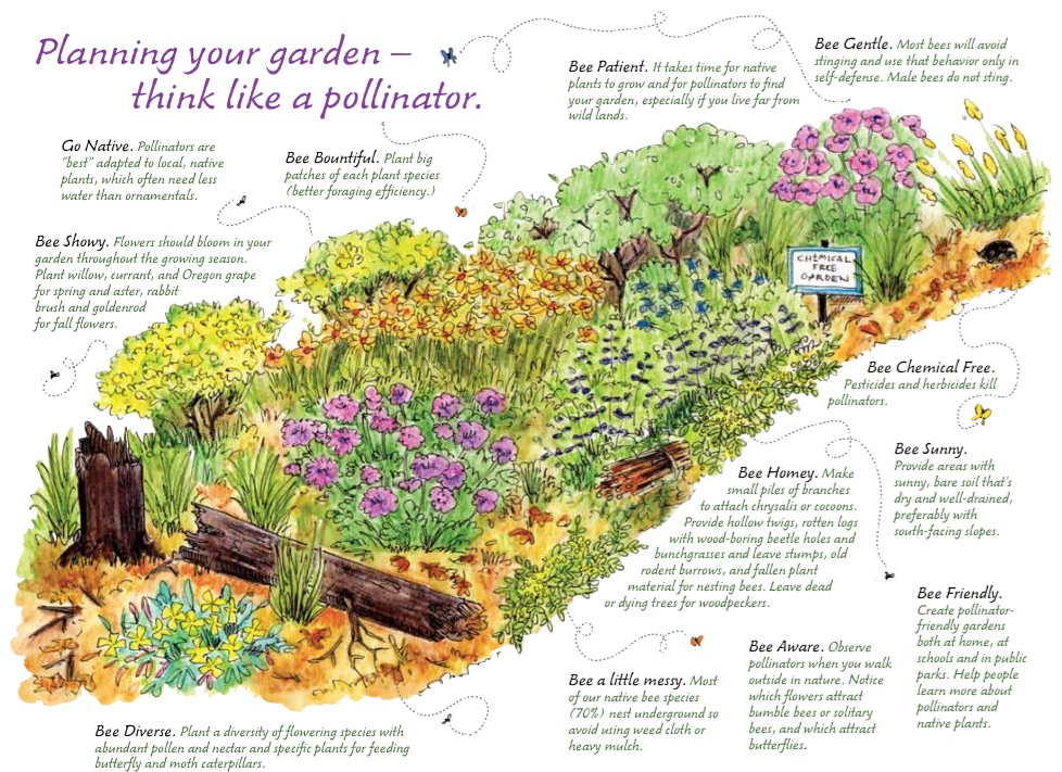 Recommendations what can we do bumble bee conservation for Planning your garden layout